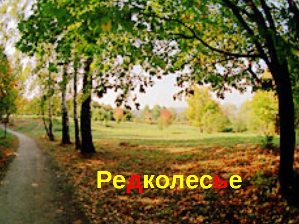 Редколесье