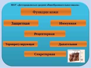 МОУ «Детгородковская средняя общеобразовательная школа» Функции кожи Защитная