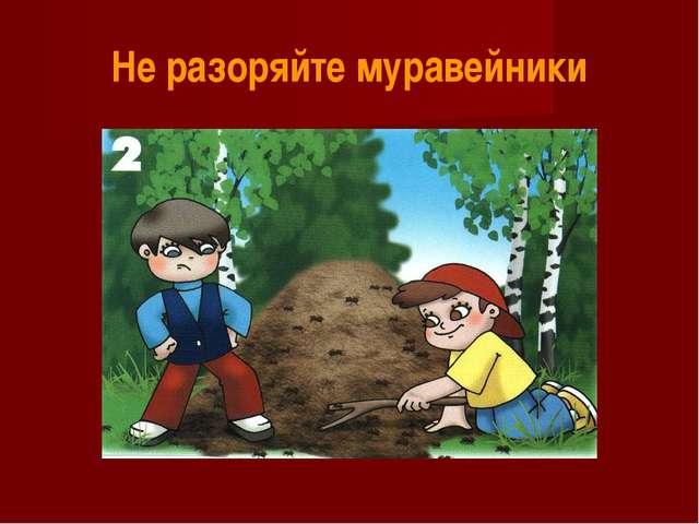 Не разоряйте муравейники