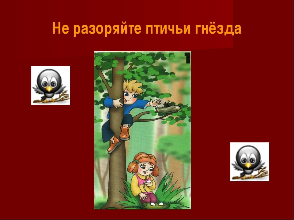 Не разоряйте птичьи гнёзда