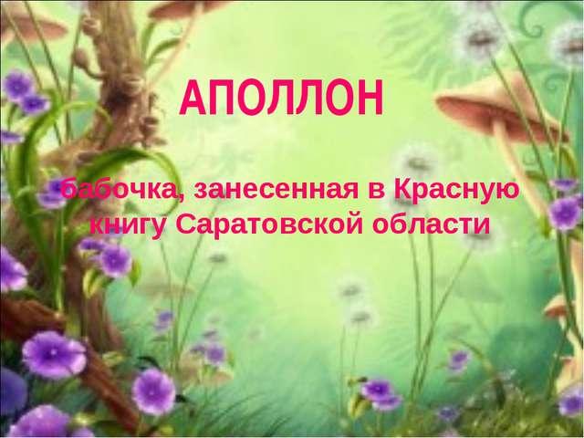 бабочка, занесенная в Красную книгу Саратовской области АПОЛЛОН