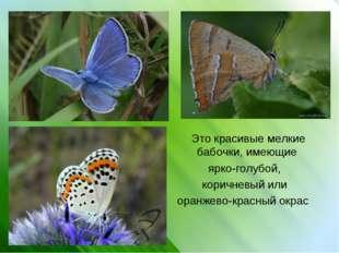 Это красивые мелкие бабочки, имеющие ярко-голубой, коричневый или оранжево-к