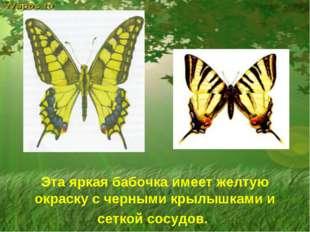 Эта яркая бабочка имеет желтую окраску с черными крылышками и сеткой сосудов.