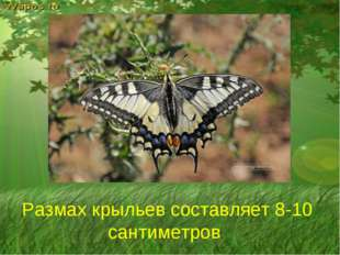 Размах крыльев составляет 8-10 сантиметров