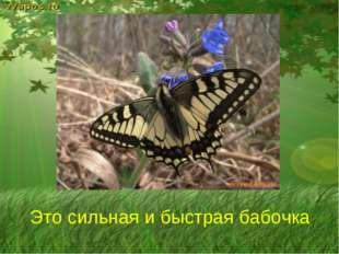 Это сильная и быстрая бабочка