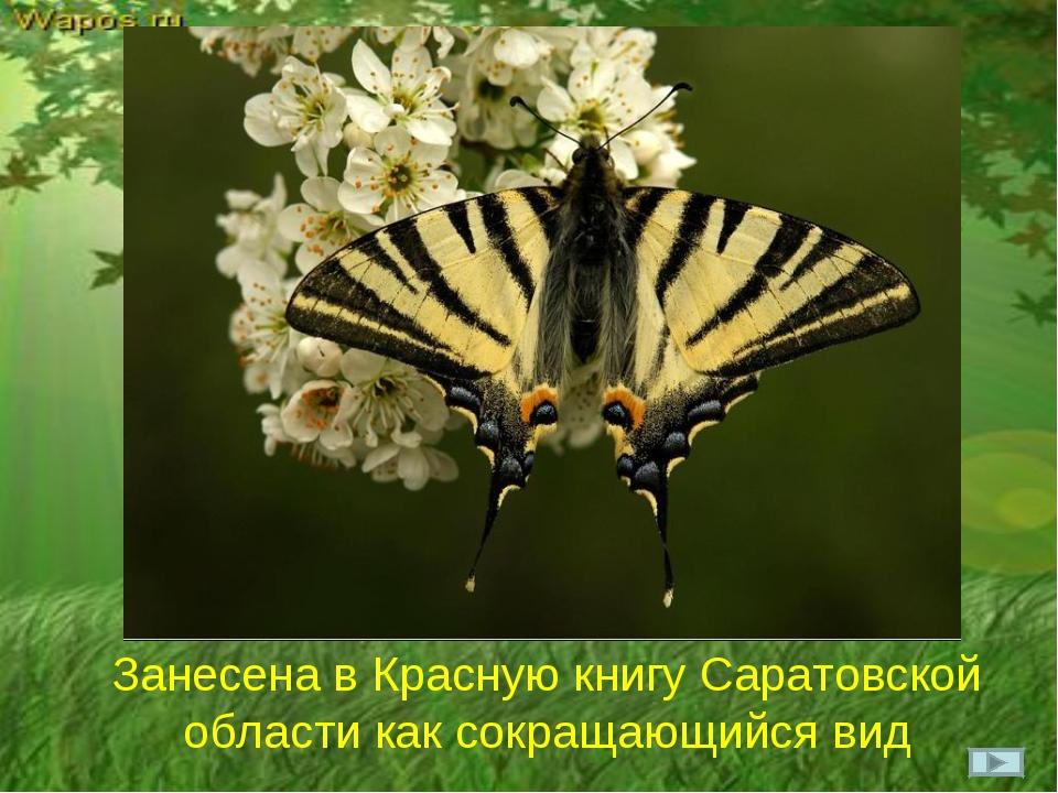 Занесена в Красную книгу Саратовской области как сокращающийся вид