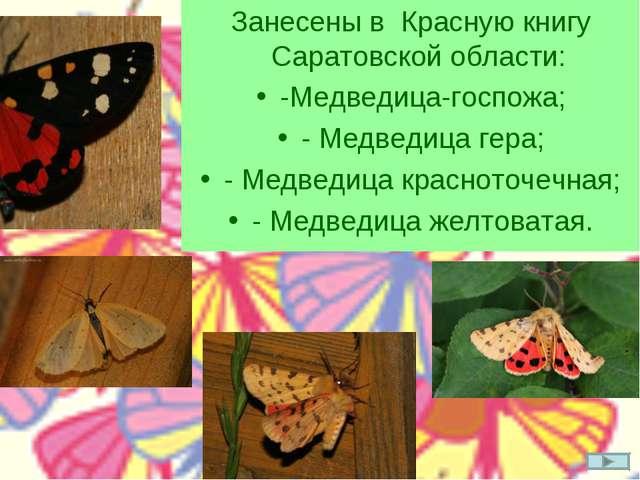 Занесены в Красную книгу Саратовской области: -Медведица-госпожа; - Медведица...