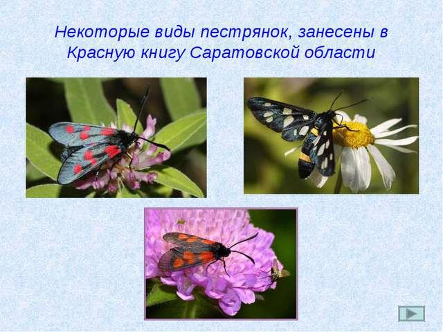 Некоторые виды пестрянок, занесены в Красную книгу Саратовской области