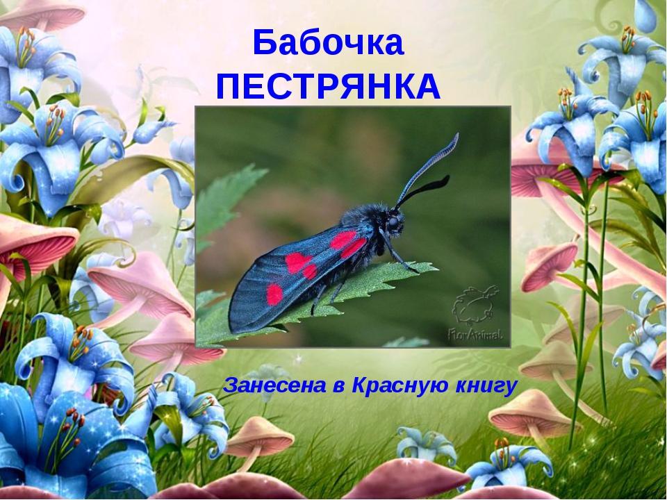 Бабочка ПЕСТРЯНКА Занесена в Красную книгу