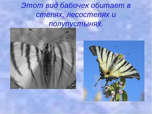 Этот вид бабочек обитает в степях, лесостепях и полупустынях.