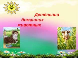 Детёныши домашних животных