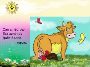 Сама пёстрая, Ест зелёное, Даёт белое. корова