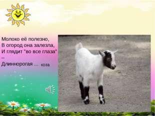 """Молоко её полезно, В огород она залезла, И глядит """"во все глаза"""" – Длиннорога"""