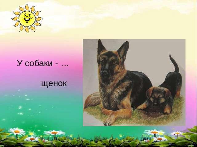 У собаки - … щенок