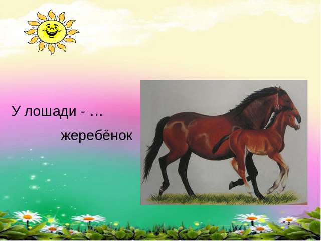 У лошади - … жеребёнок