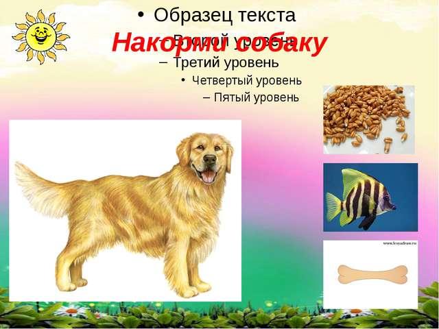 Накорми собаку
