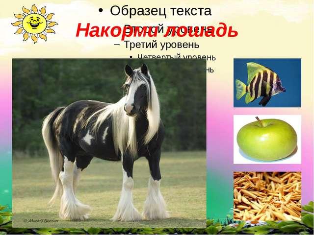 Накорми лошадь