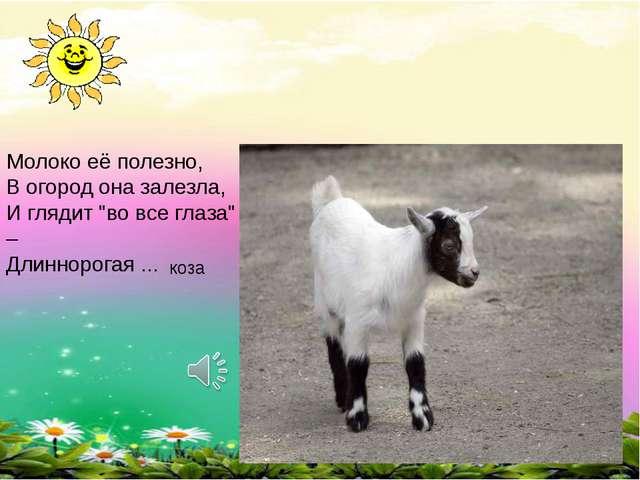 """Молоко её полезно, В огород она залезла, И глядит """"во все глаза"""" – Длиннорога..."""