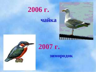 2007 г. 2006 г. чайка зимородок