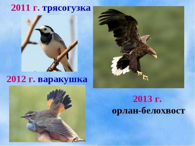 2011 г. трясогузка 2012 г. варакушка 2013 г. орлан-белохвост