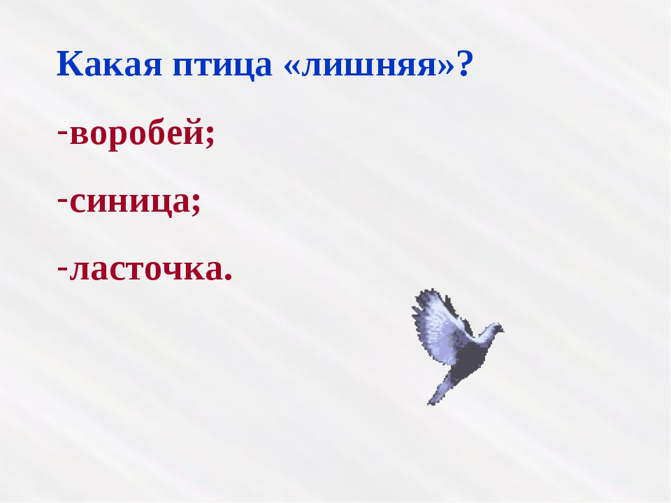 Какая птица «лишняя»? воробей; синица; ласточка.