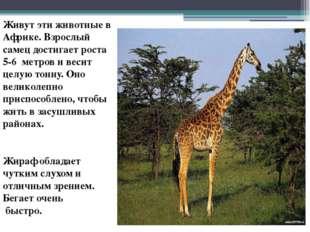 Живут эти животные в Африке. Взрослый самец достигает роста 5-6 метров и веси
