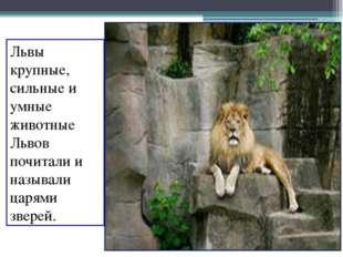 Львы крупные, сильные и умные животные Львов почитали и называли царями звере