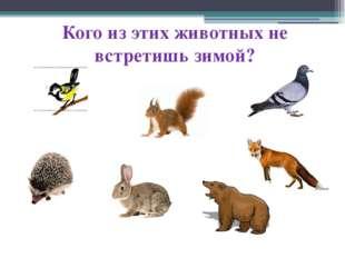 Кого из этих животных не встретишь зимой?