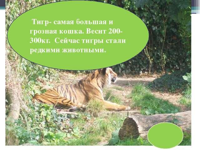 Хищник полосатый, Рыжий и усатый. Н кота похож немножко и мяукает как кошка....