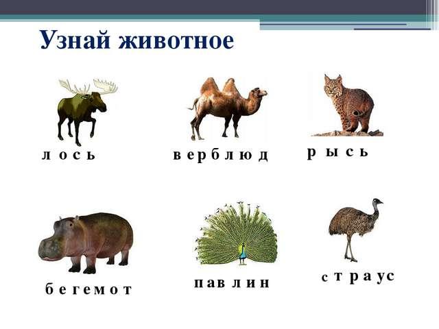 Узнай животное р ы с ь в е р б л ю д л о с ь б е г е м о т п а в л и н с т р...