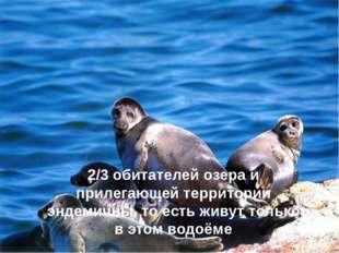 2/3 обитателей озера и прилегающей территории эндемичны, то есть живут только