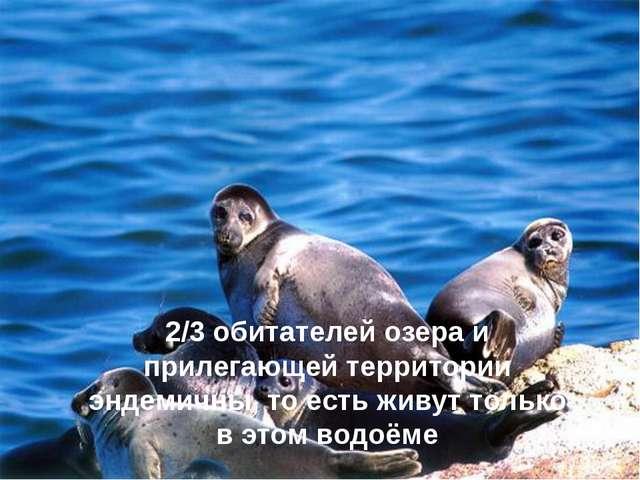 2/3 обитателей озера и прилегающей территории эндемичны, то есть живут только...