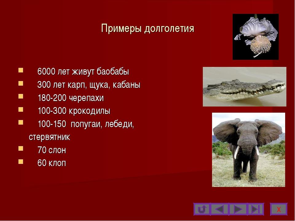 Примеры долголетия 6000 лет живут баобабы 300 лет карп, щука, кабаны 180-200...