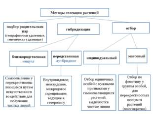 Методы селекции растений гибридизация отбор подбор родительских пар (географи