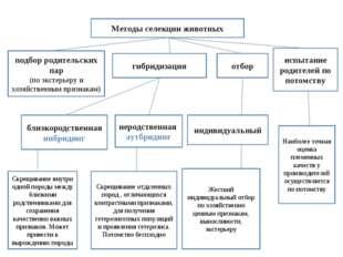 Методы селекции животных гибридизация отбор подбор родительских пар (по эксте