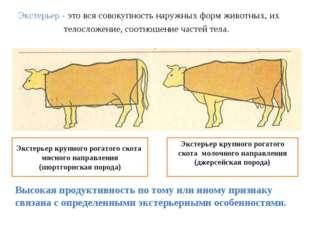 Экстерьер - это вся совокупность наружных форм животных, их телосложение, со