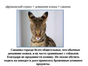 африканский сервал + домашняя кошка = саванна Саванны гораздо более общительн