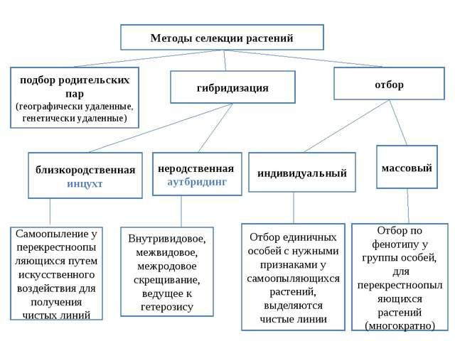 Методы селекции растений гибридизация отбор подбор родительских пар (географи...