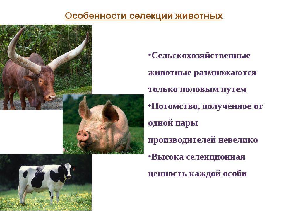 Сельскохозяйственные животные размножаются только половым путем Потомство, по...