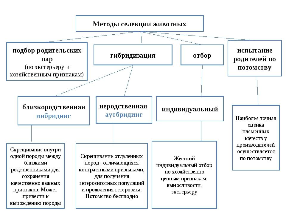 Методы селекции животных гибридизация отбор подбор родительских пар (по эксте...