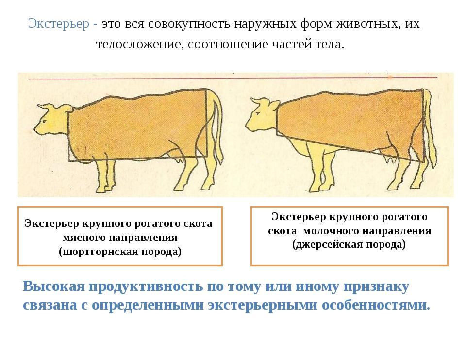 Экстерьер - это вся совокупность наружных форм животных, их телосложение, со...