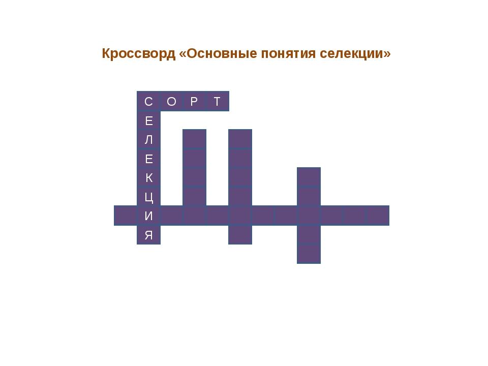 Кроссворд «Основные понятия селекции» С Е Л Е К Ц И Я О Р Т