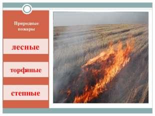 Природные пожары лесные торфяные степные