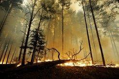 http://go1.imgsmail.ru/imgpreview?key=http%3A//www.etoday.ru/uploads/2010/08/10/forrest_fires1.jpg&mb=imgdb_preview_430&q=90&w=246