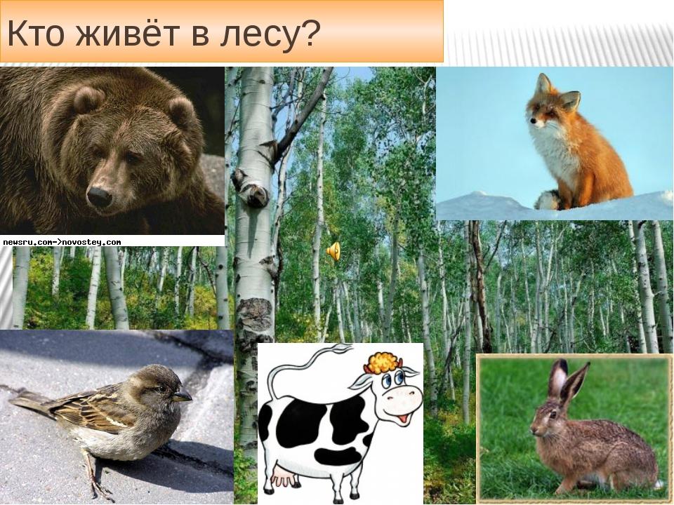 Словарная страничка Кто живёт в лесу?