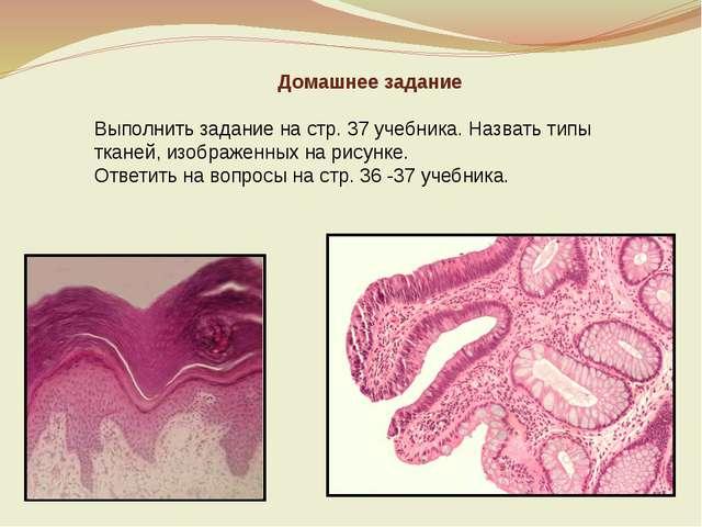 Домашнее задание Выполнить задание на стр. 37 учебника. Назвать типы тканей,...