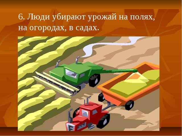 6. Люди убирают урожай на полях, на огородах, в садах.