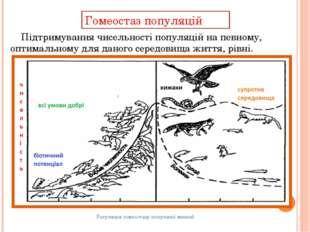 Гомеостаз популяцій Регуляція гомеостазу популяції мишей Підтримування чисель