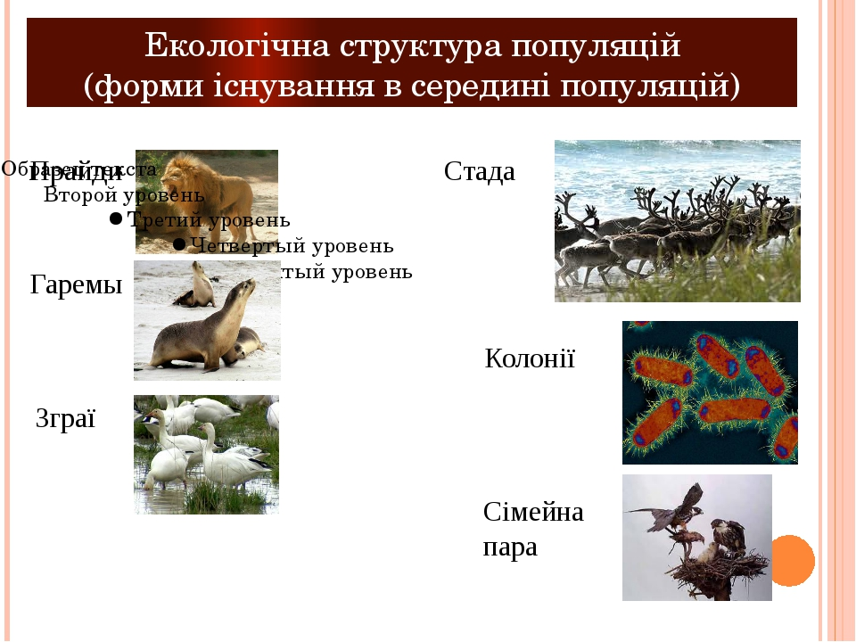 Екологічна структура популяцій (форми існування в середині популяцій) Прайди...