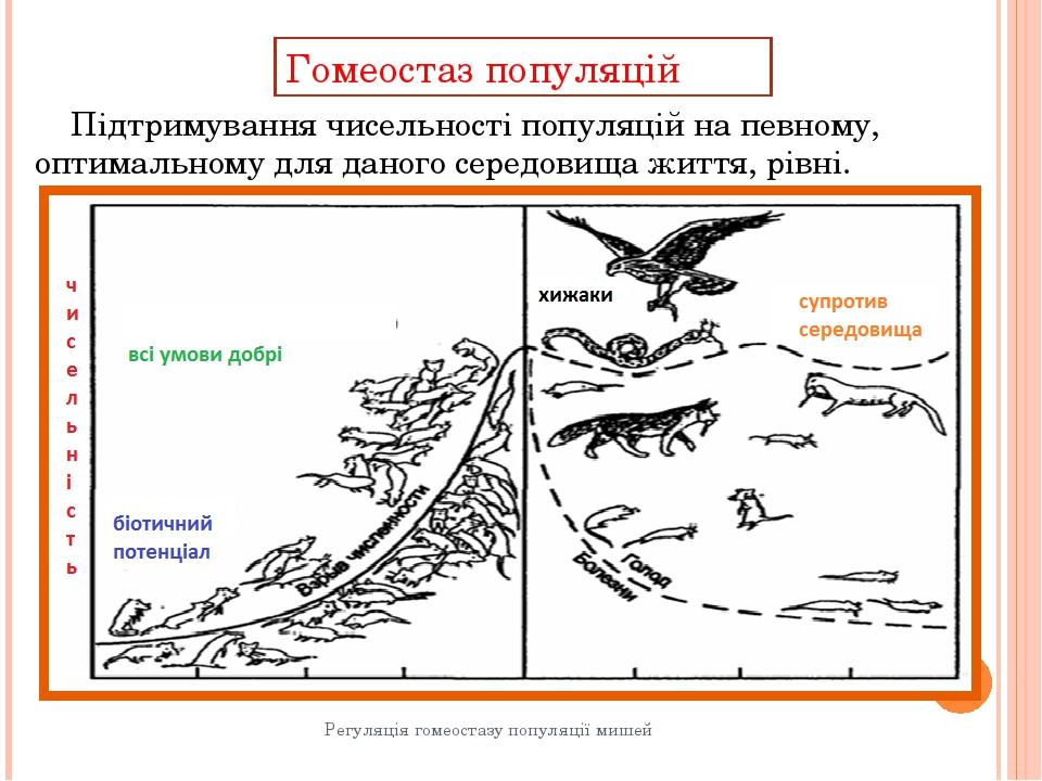Гомеостаз популяцій Регуляція гомеостазу популяції мишей Підтримування чисель...